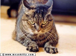 a very grouchy looking brown tabby cat representing meankitty editing