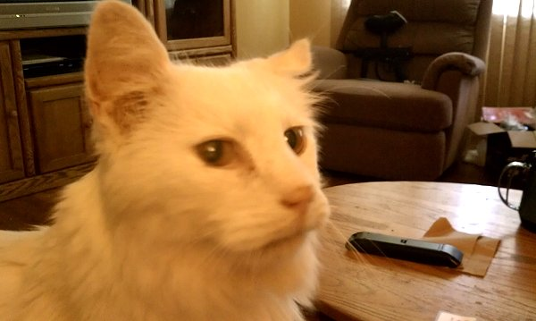 zombie the cat is a white fuzzy cat who appears in a paranormal romantic comedy series