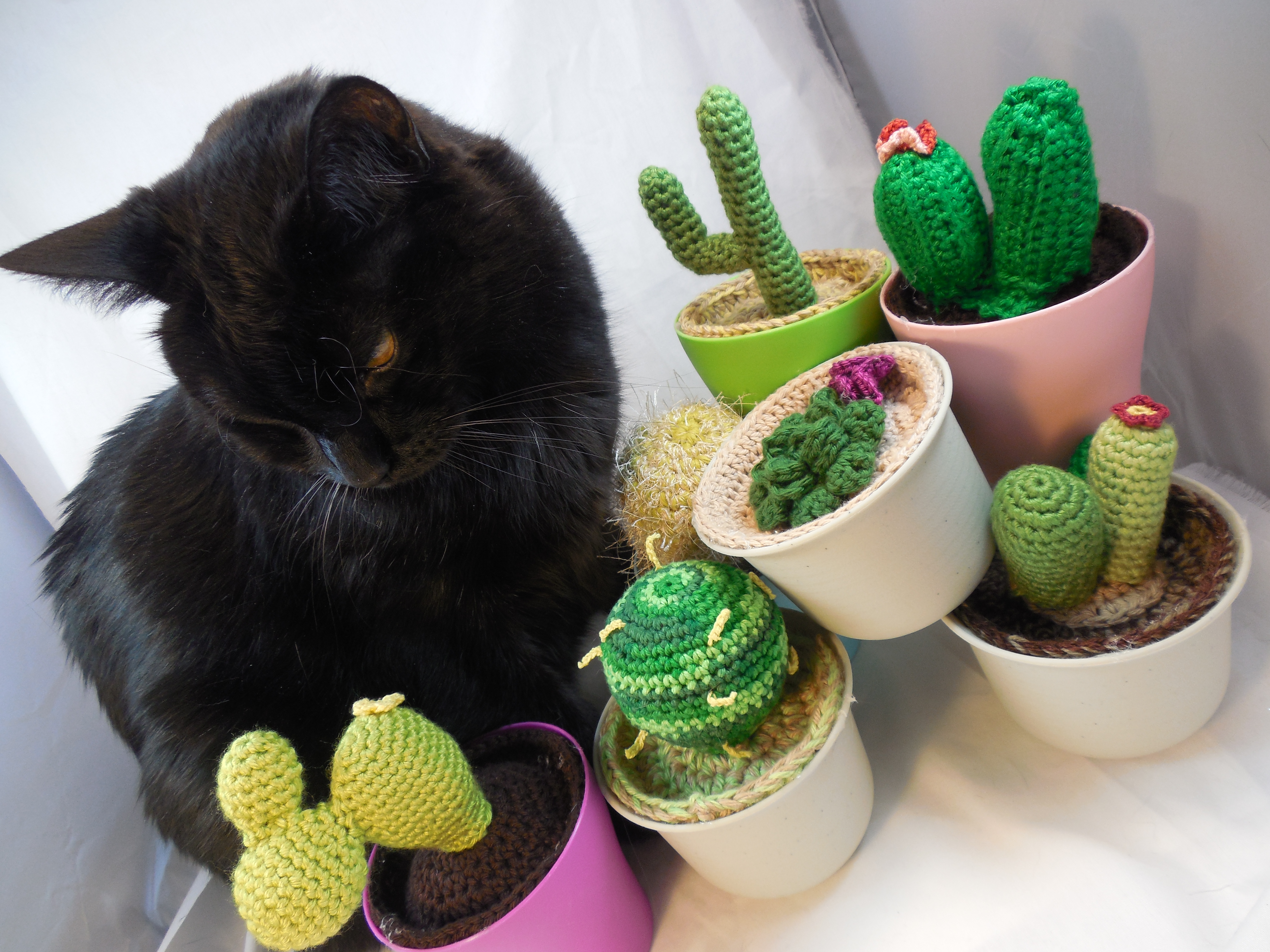 a black cat sitting between bunch of crocheted succulents