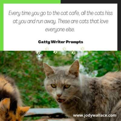 Everytime you go to the cat cafe, the cats hiss at you and run away